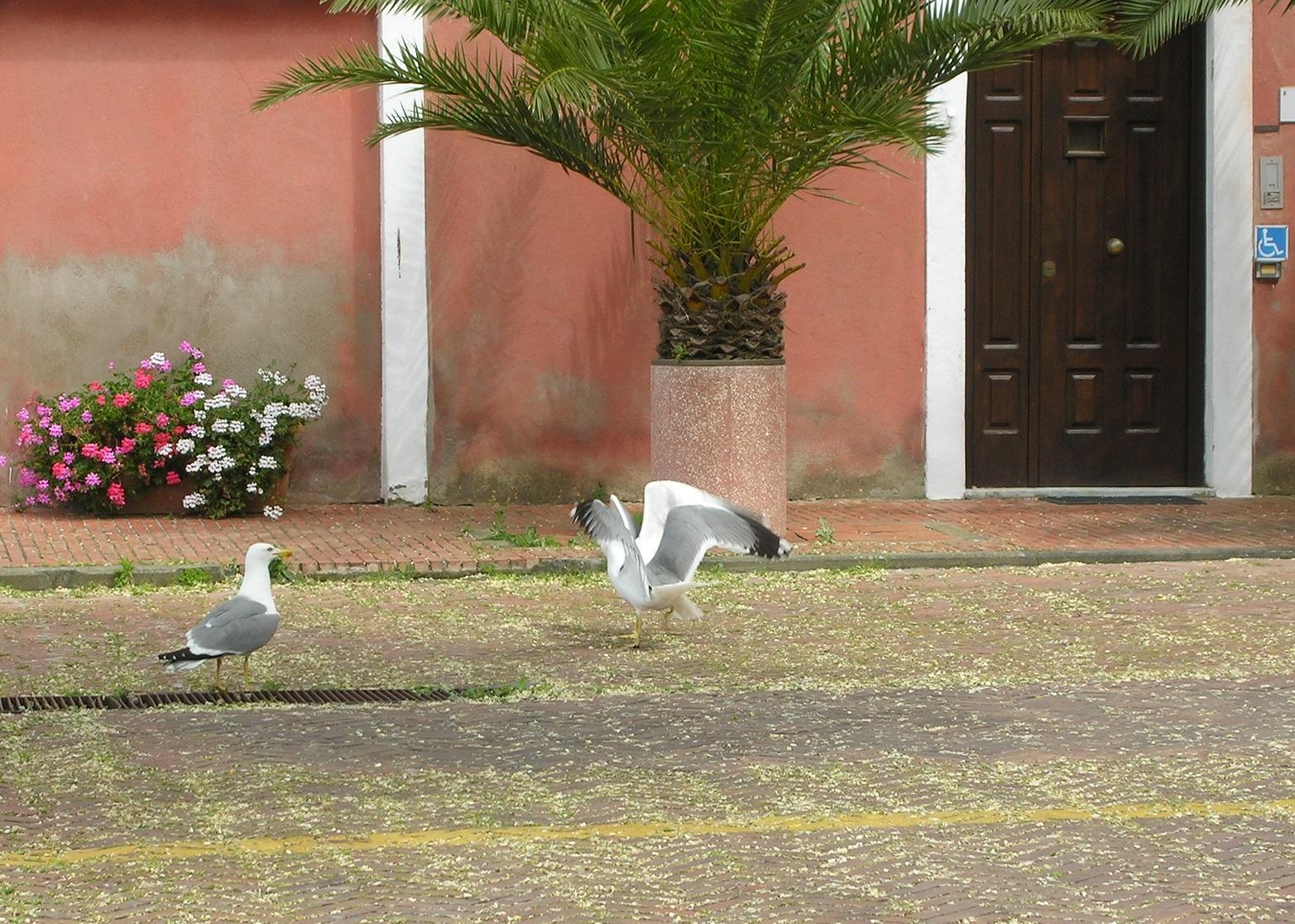 Besonderen Charme hat das steil angelegte alte Porto Ercole - hier ein Möventanz auf der Piazza auf erster Ebene