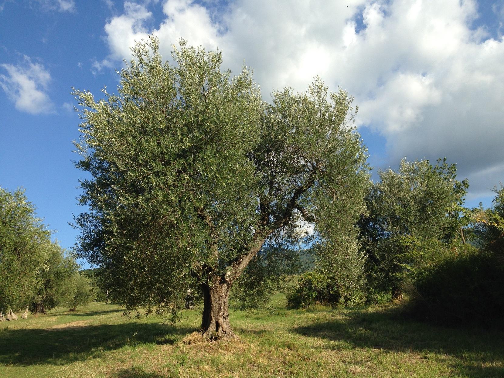 Ich bin der Baum des Lebens