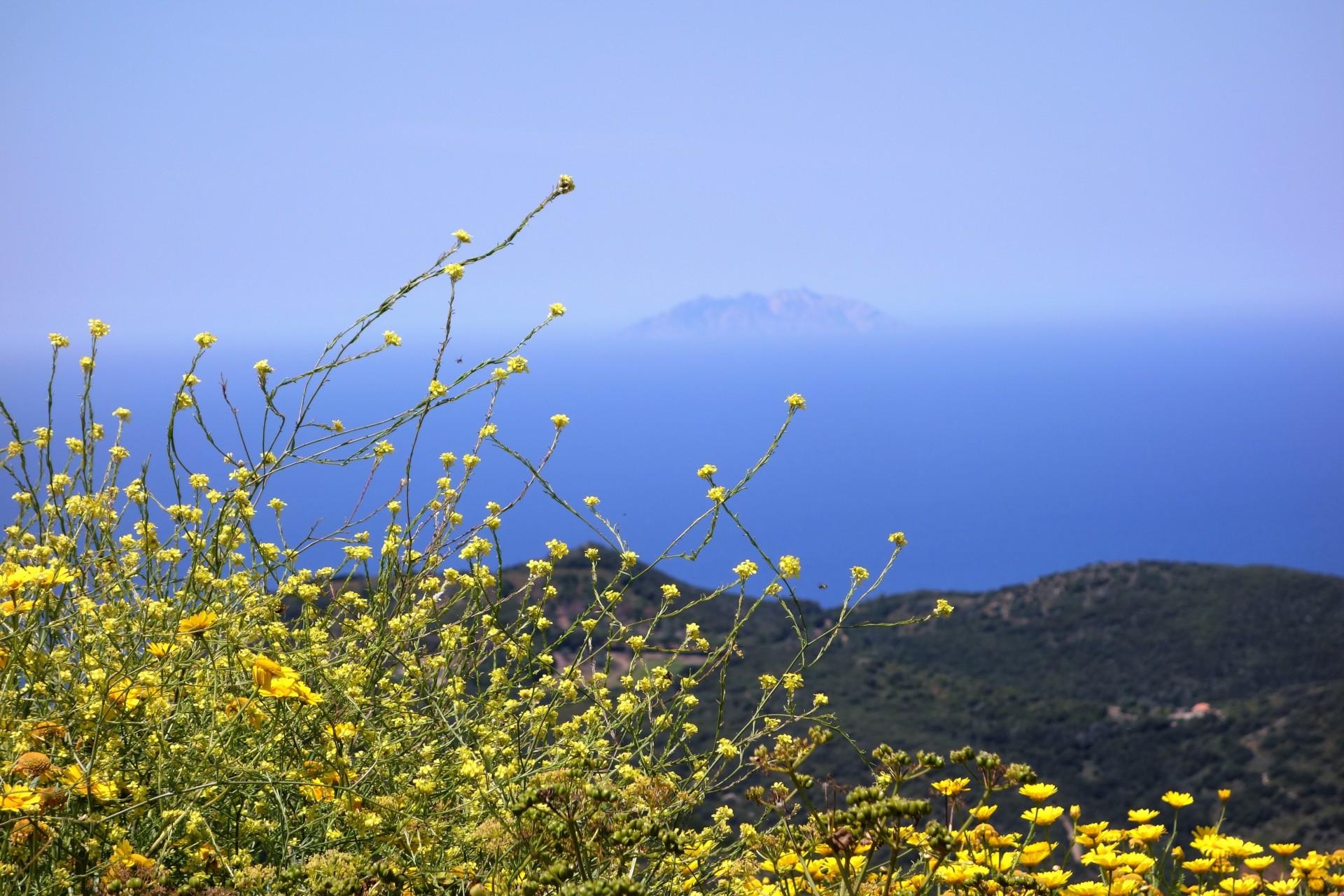 Giglio, Blick af Montecristo