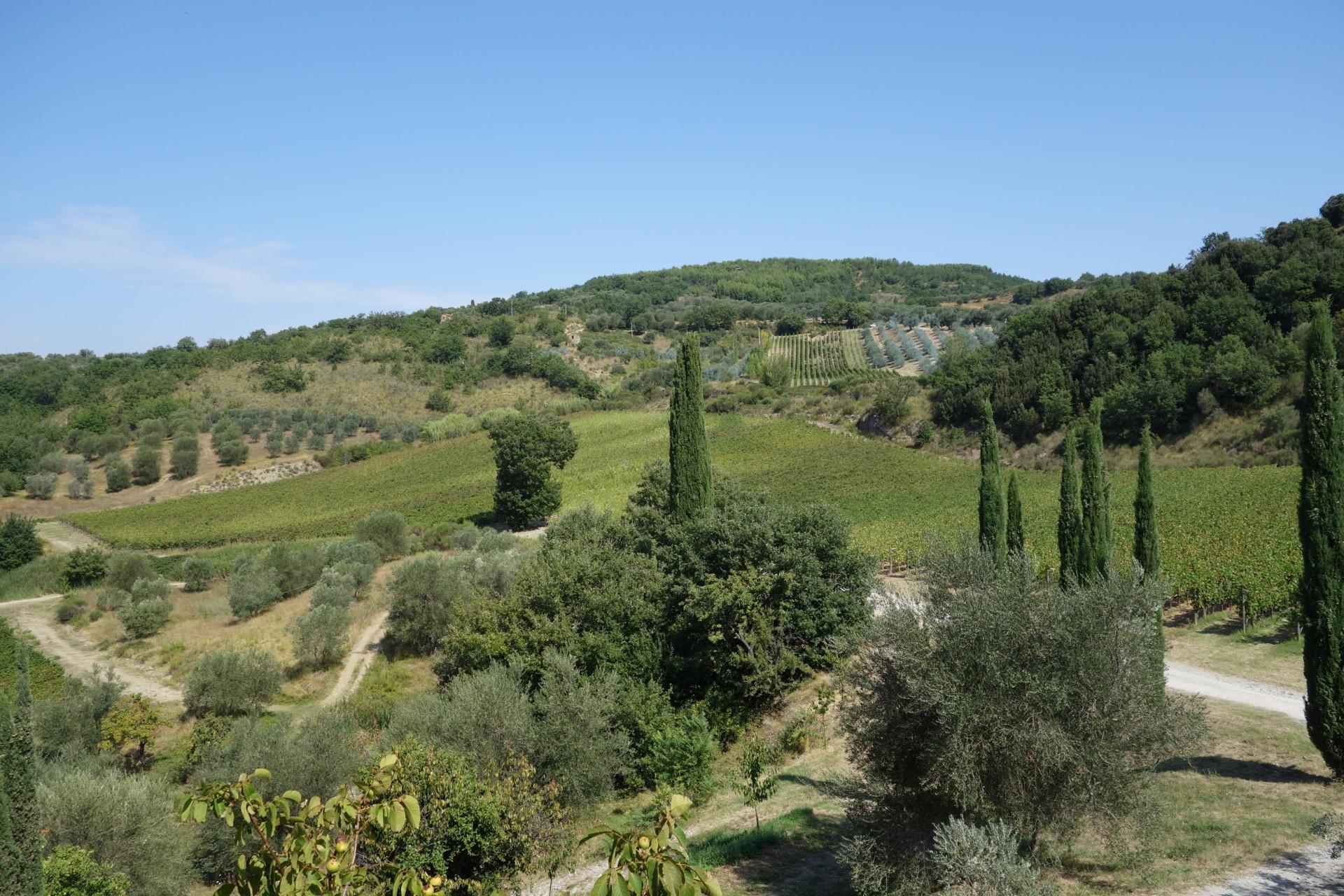 Die Rebhänge von Castello di Potentino