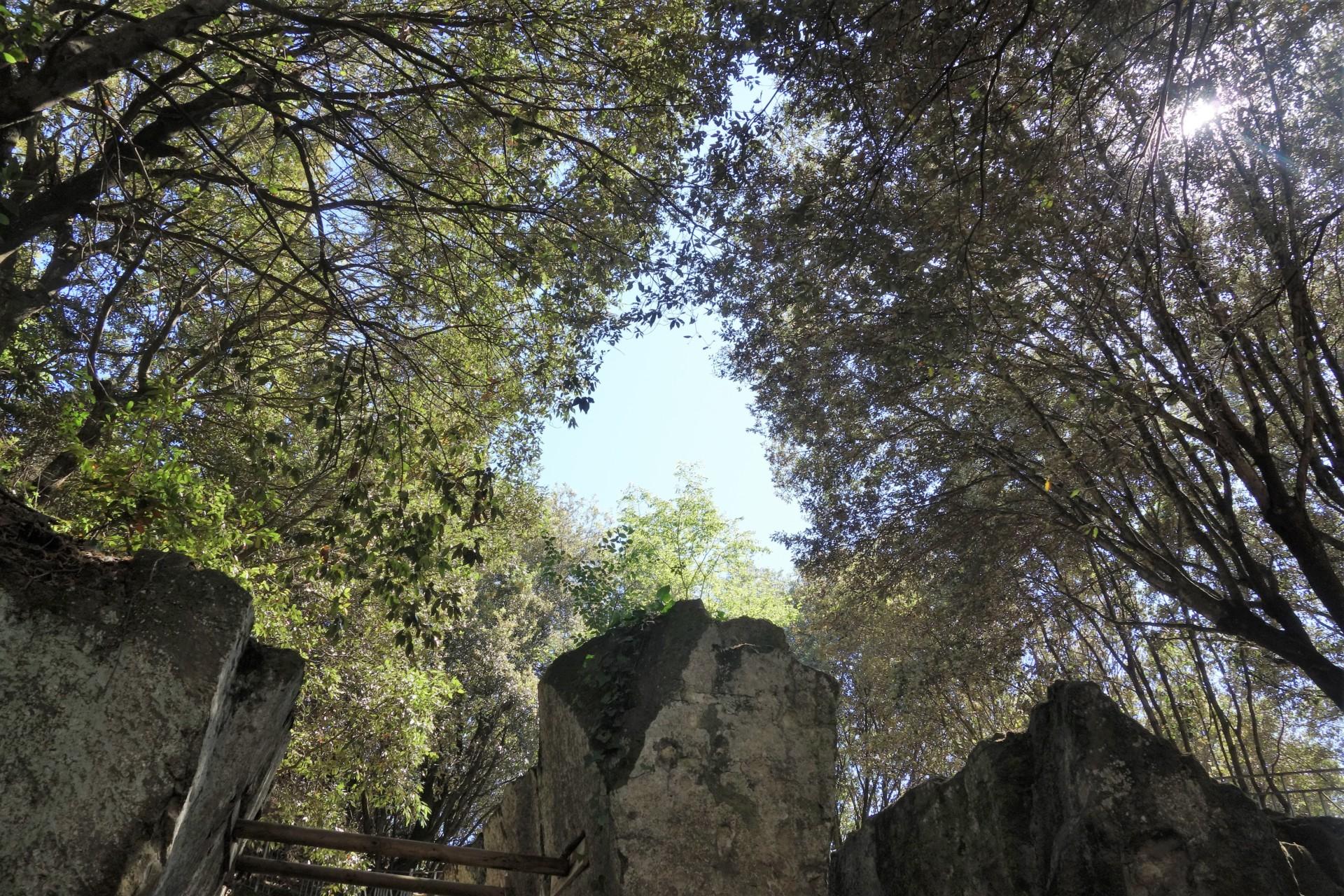 Blick aus der Grotta della Sibilla in die überdachenden Bäume