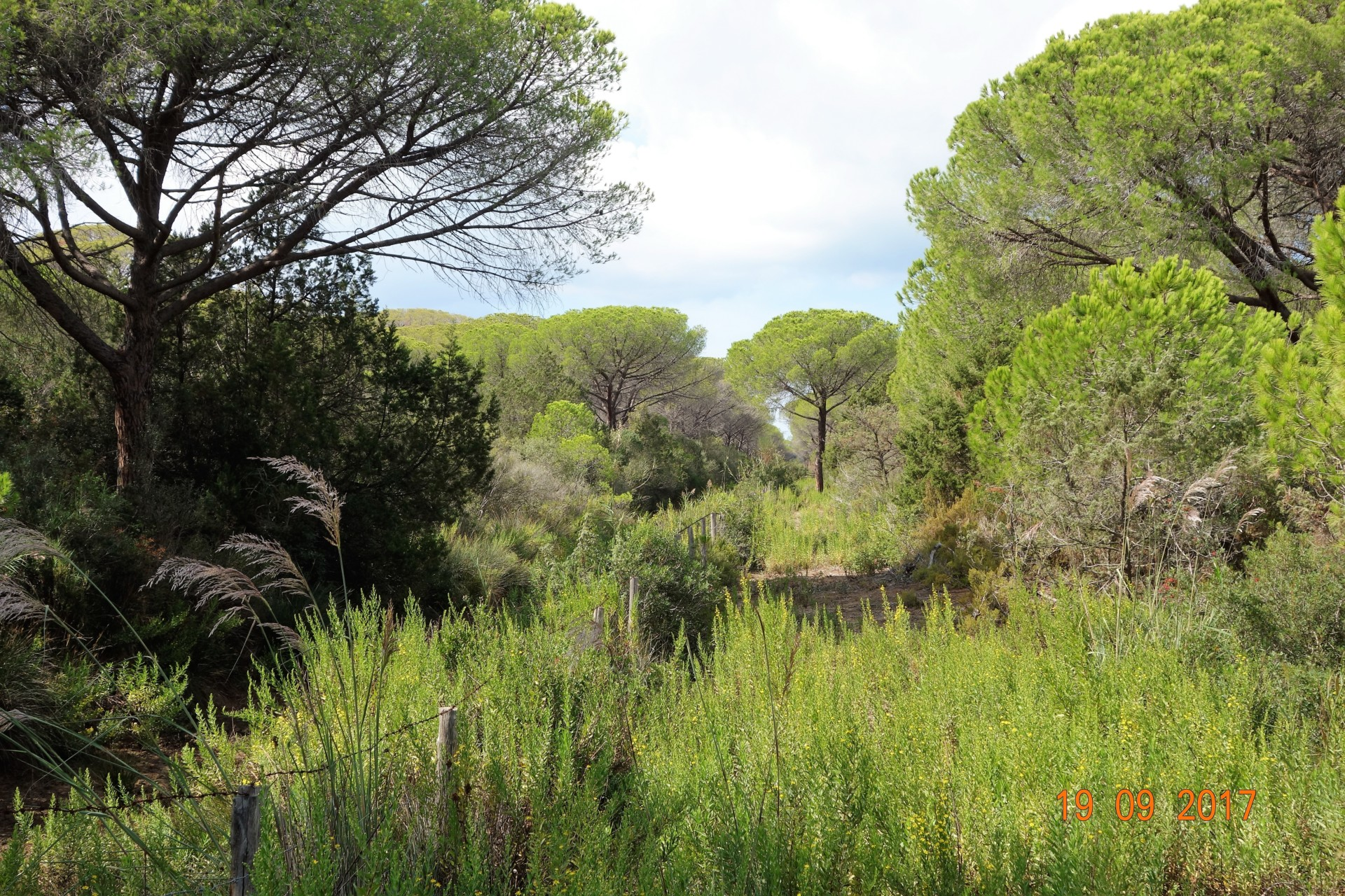 Alles grün entlang des Kanals, auch im trockenen Sommer 2017