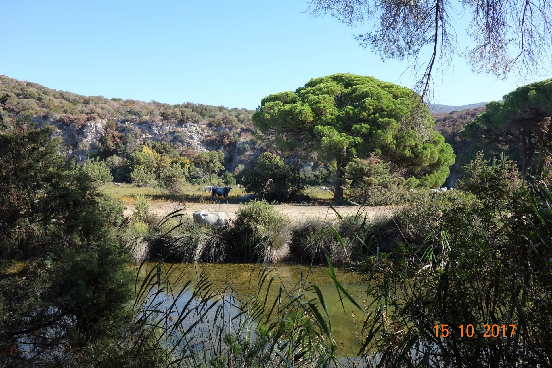 Im Naturpark der Maremma