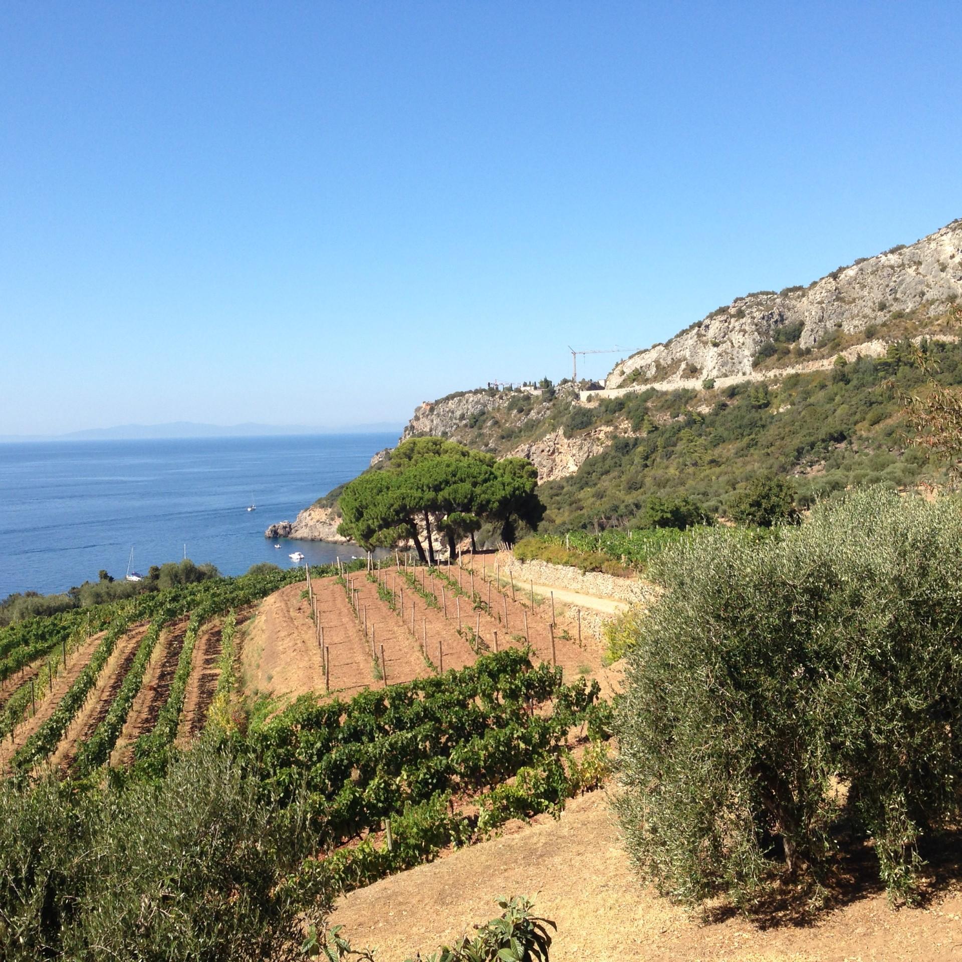 Weingut auf dem Monte Argentario - Blick gegen Westen