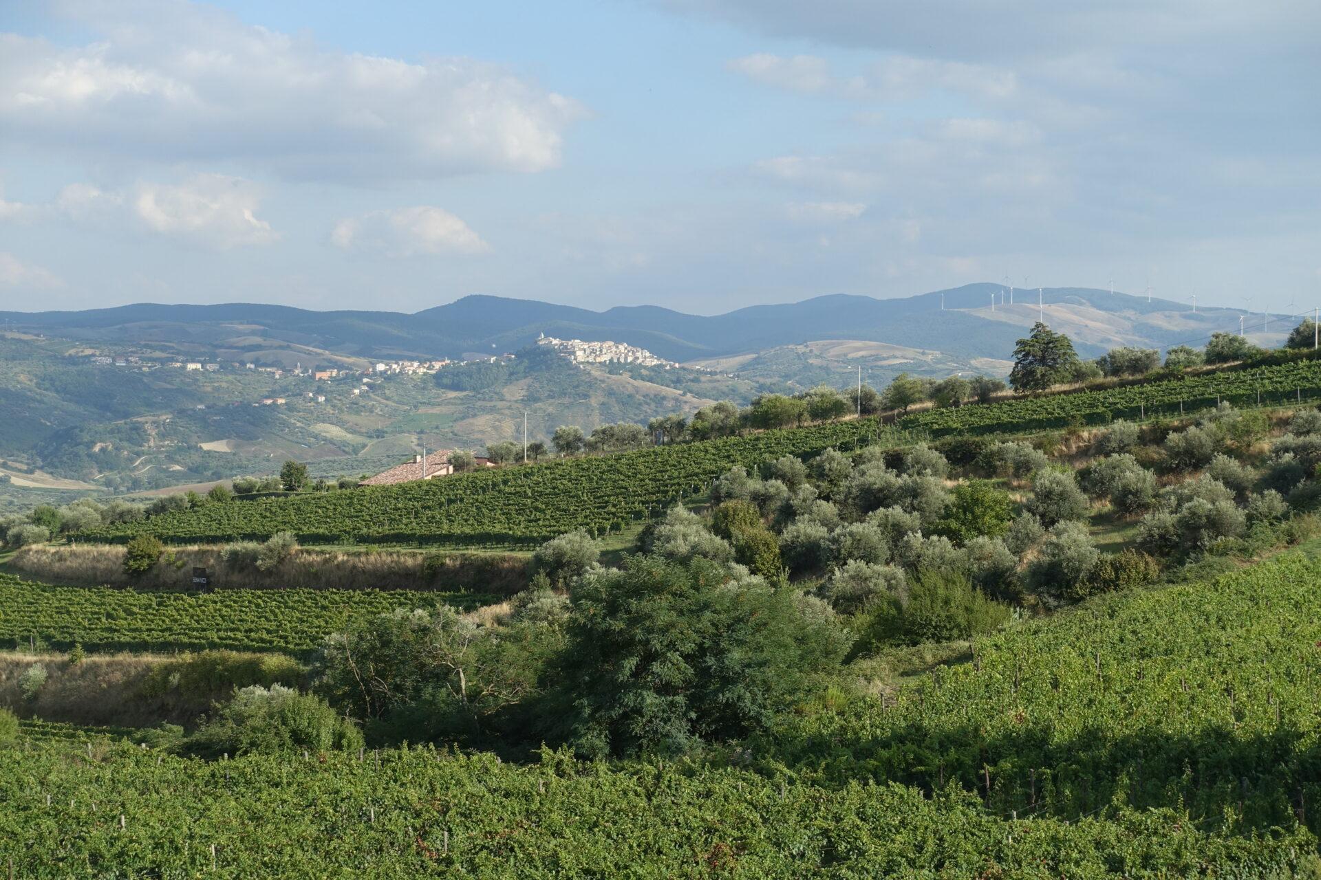 Die Weinberge von Elena Fucci in Barile