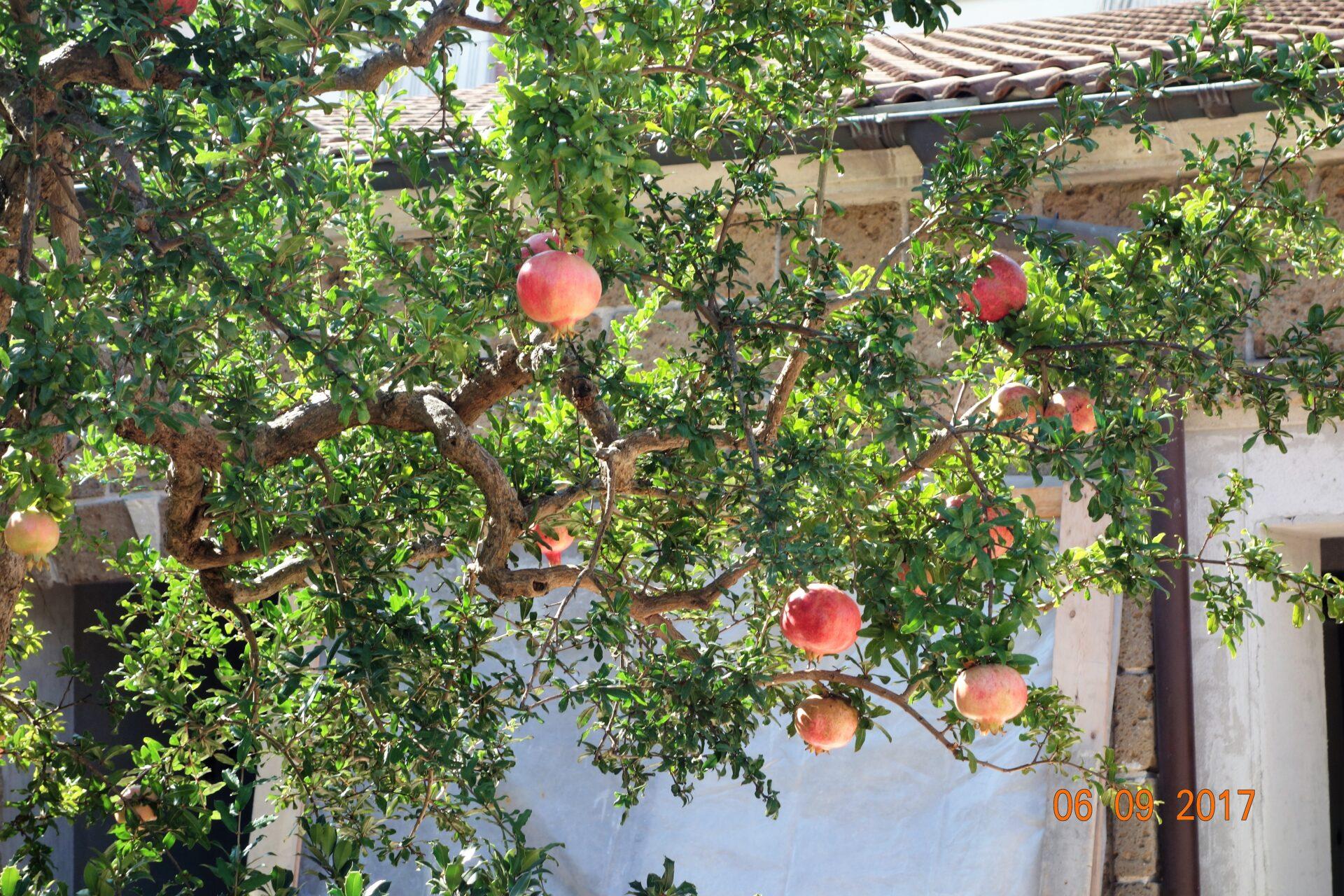 Melograno, Granatapfel überall